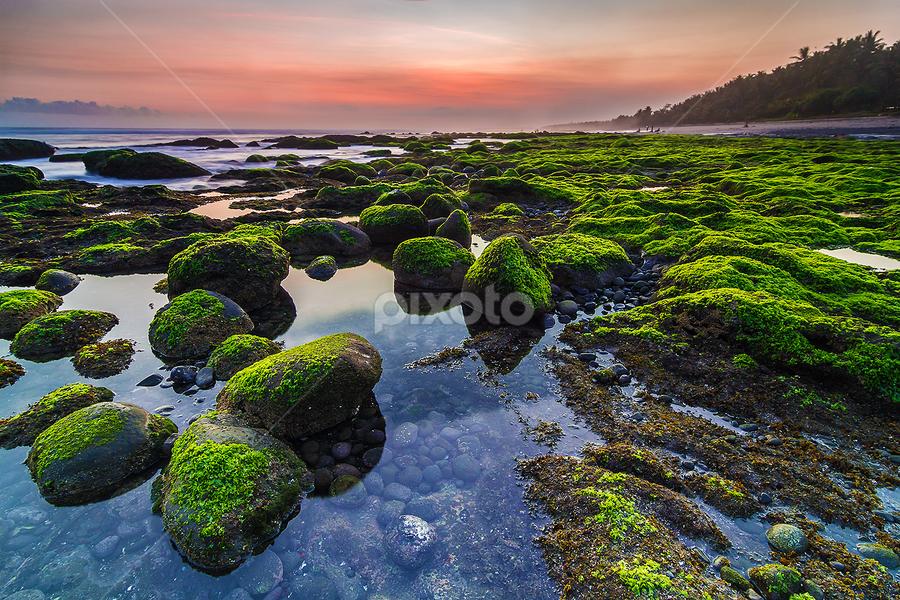 Mossy Beach Yeh Leh by Budi Astawa - Landscapes Beaches ( yeh leh, pekutatan, jembrana, pengeragoan )
