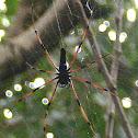Giant wood spider (female)