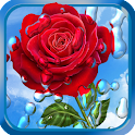 Summer Rain, Flowers, HD LWP icon
