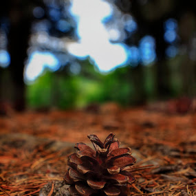 Pétalos de madeira by Miguel García - Nature Up Close Other Natural Objects ( autumn, forest, pine, landscape )