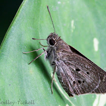 Bangkok biodiversity
