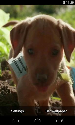 귀여운 강아지 동영상 라이브 월페이퍼