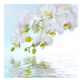 Orchids In Water XIII