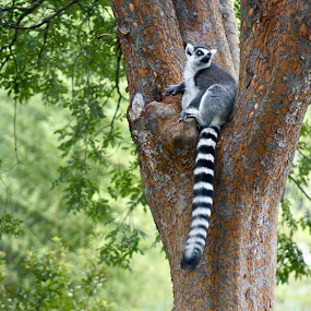 Hanging  Out by Ashley Gibson - Animals Other Mammals ( , Earth, Light, Landscapes, Views )