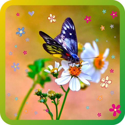 Butterfly Spring livewallpaper LOGO-APP點子