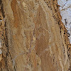 Insect trails on tree trunk