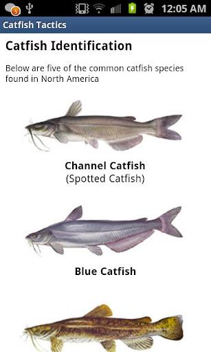 Catfish Tactics & Secret Baits  screenshots 2