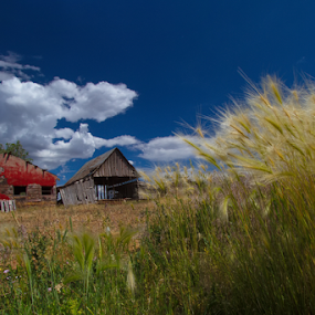 Primary Colors of Durango - Red Barn and Field by Doug Redding - Landscapes Prairies, Meadows & Fields ( red barn, barn, durango, rustic barn, colorado, landscape,  )