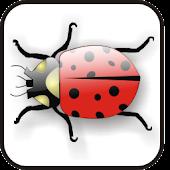 Lady Bug doo-dad