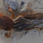 Some type Cricket..?? not sure