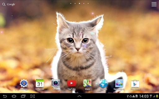 Cat Live Wallpaper 1.0.8 screenshots 14