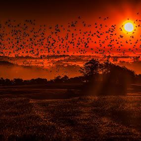 Flying at Dawn by Troy Snider - Landscapes Mountains & Hills ( flock of birds, orange, sunrises, breath taking, birds, flock, orange light, bird, first light, dawn, magical, dramatic, sunrise )