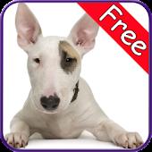 Bull Terrier+ Free