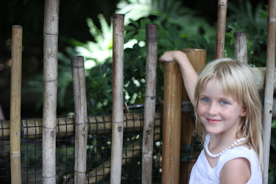 B at Animal Kingdom