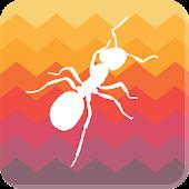Guia de Insectos de Suelo