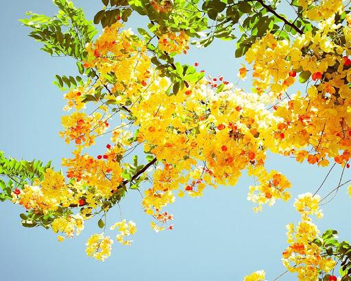 免費娛樂App|花卉世界壁紙|阿達玩APP