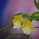 Orquídea epifita