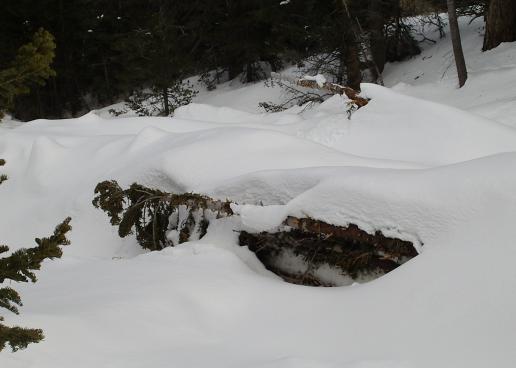 toppled trees