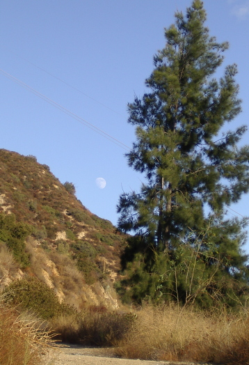 Moon rising about the road between tree and mountain.