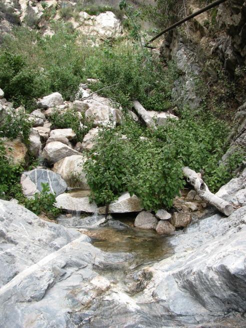 Pool in Rubio Canyon.