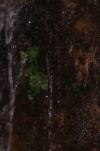 dark moss