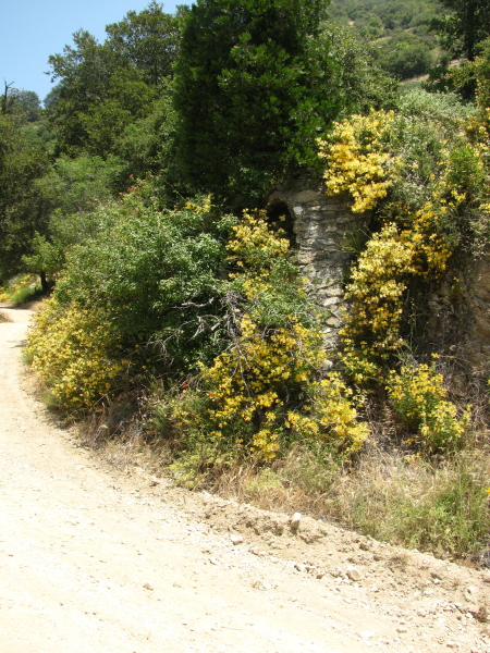 Some structure along the side of the road, surrounded in yellow monkey flower.