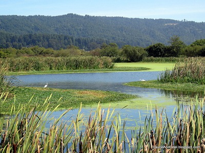 Walking/birdwatching at the Arcata Marsh