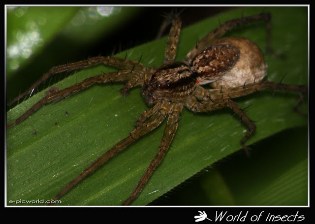 spider picture
