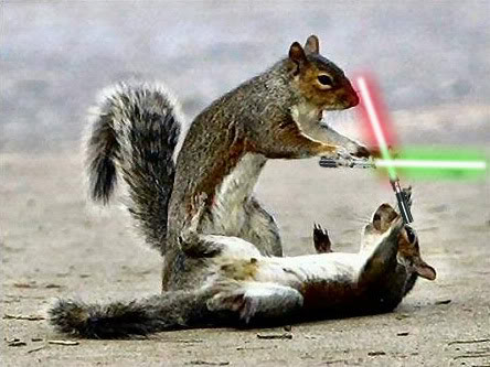 Squirrels with Lightsabers - Source: Animals with Lightsabers