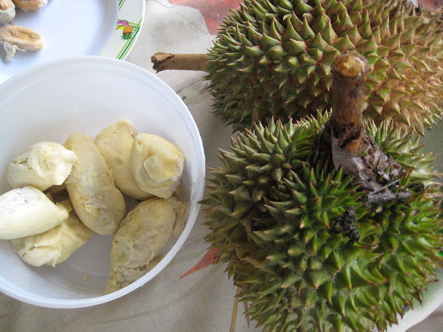 Durian Grows Potential As Prime Philippine Export Product