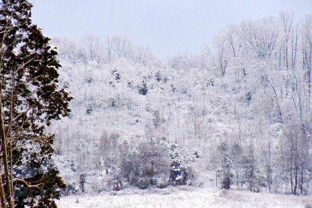 January snow in Hardin Valley