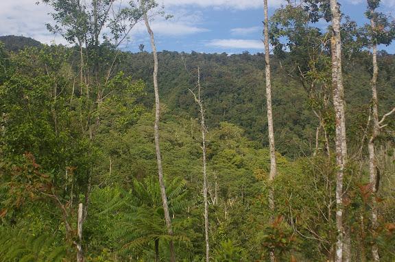 La forêt au-dessus de Siobri, Arfak, août 2007. Photo : J.-M. Gayman
