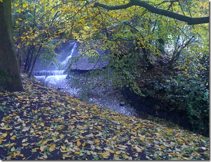 Schoenstatt woods