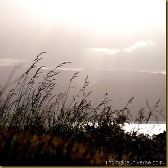 Reeds in the sunlight - square