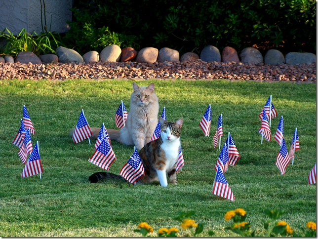 cat flags 1