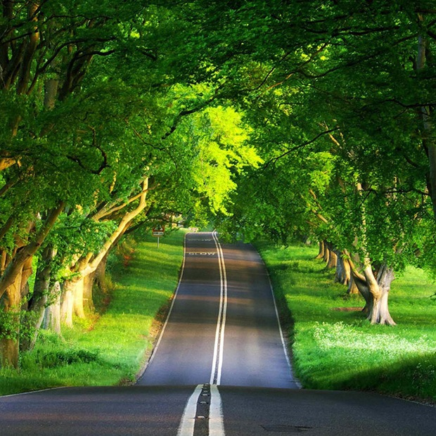 Road through the green. Wallpaper for ipad