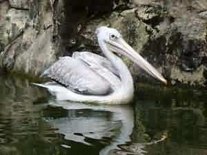 tongtong stork