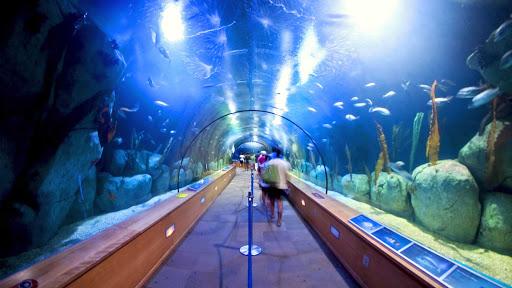El-Oceanografic-Valencia-Spain - El Oceanogràfic has exhibits of more than 500 different  sea creatures and wildlife from all over the world. You'll find it at Ciudad de las Artes y de las Ciencias in Valencia, Spain.