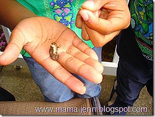seed skin