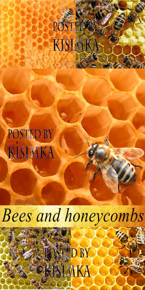 Stock Photo: Bees and honeycombs