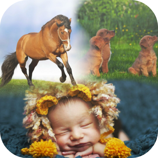 No crop insta collage for android apk download.