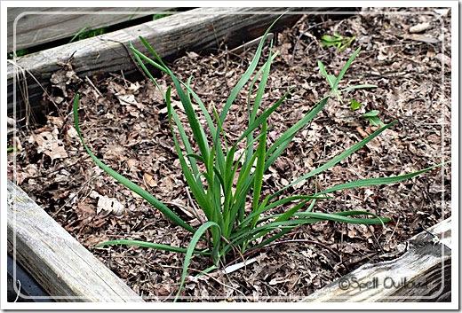 gardenplant