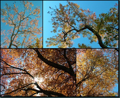 looking up collage