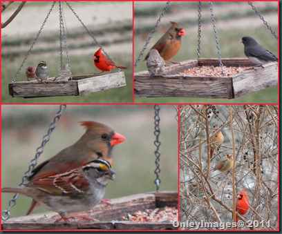 cardinals-others collage