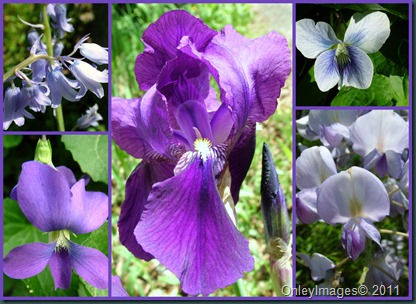 Easterpurple collage