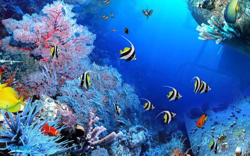 nice underwater wallpaper