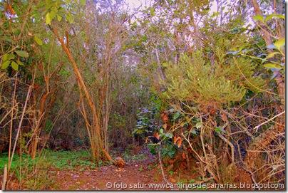 2050 Bosque Faya-Brezal