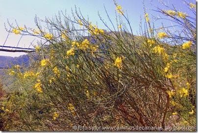 2581 Cascajales-Valsequillo(Retama de olor)
