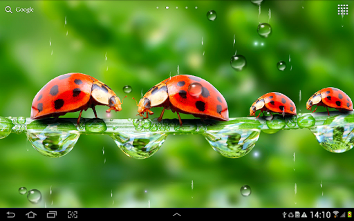 Rain Live Wallpaper 1.0.9 screenshots 9