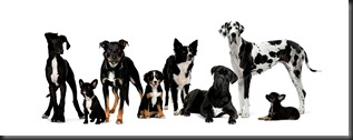 Dogs LR - Fotolia_7951927_Subscription_XXL[1]